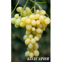 Виноград Болгария (Ранний/Белый)